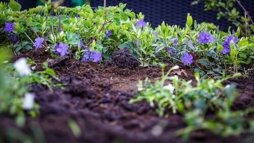 How to improve soil quality in your garden