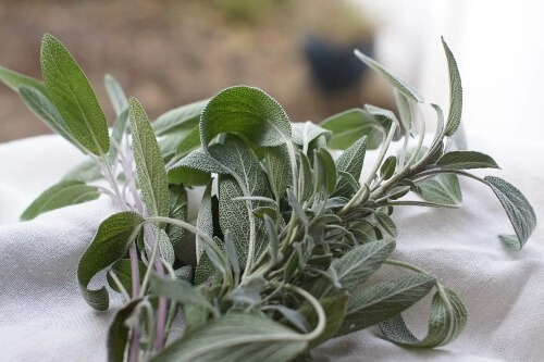 Sage has sedative effects, drinking sage tea before bed will provide a great sleep