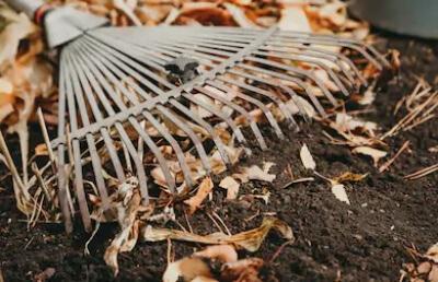 best way to rake pine needles