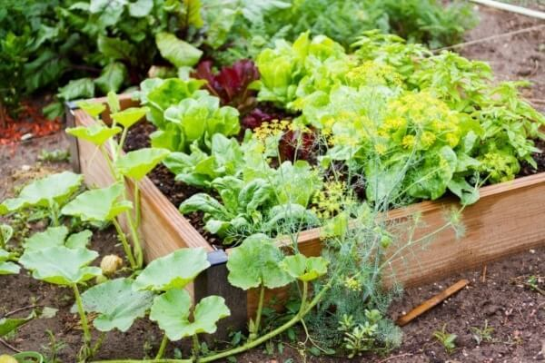 Cut Chemicals From Your Gardening
