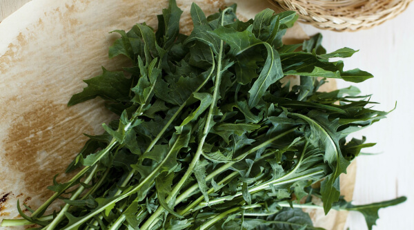 Eating Dandelion leaves with or without cooking
