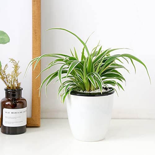 How to use self watering pots