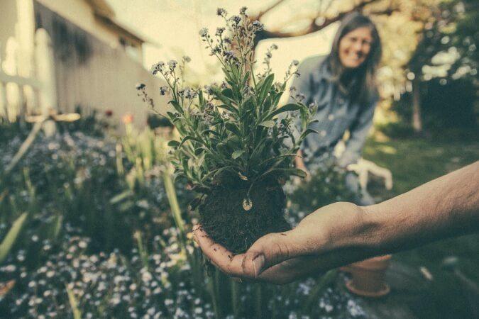 Preparing a spring flower garden