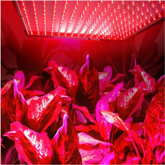 Red Grow Light