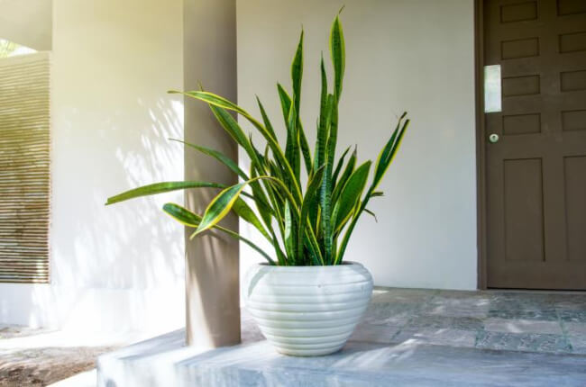 What are Low-light Indoor Plants?