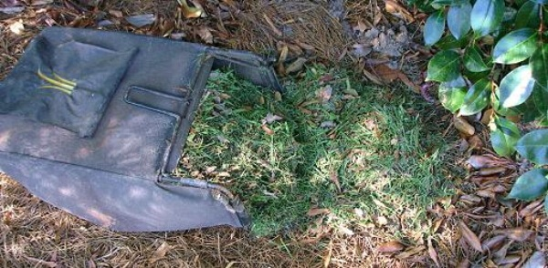 Benefits of Grass Clipping As Mulch