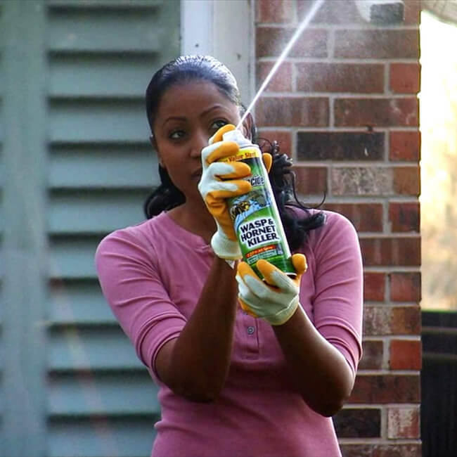 wasp insecticide sprays