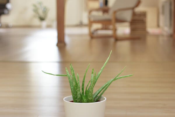 Aloe Vera can help to reduce the symptoms of a wide variety of skin ailments