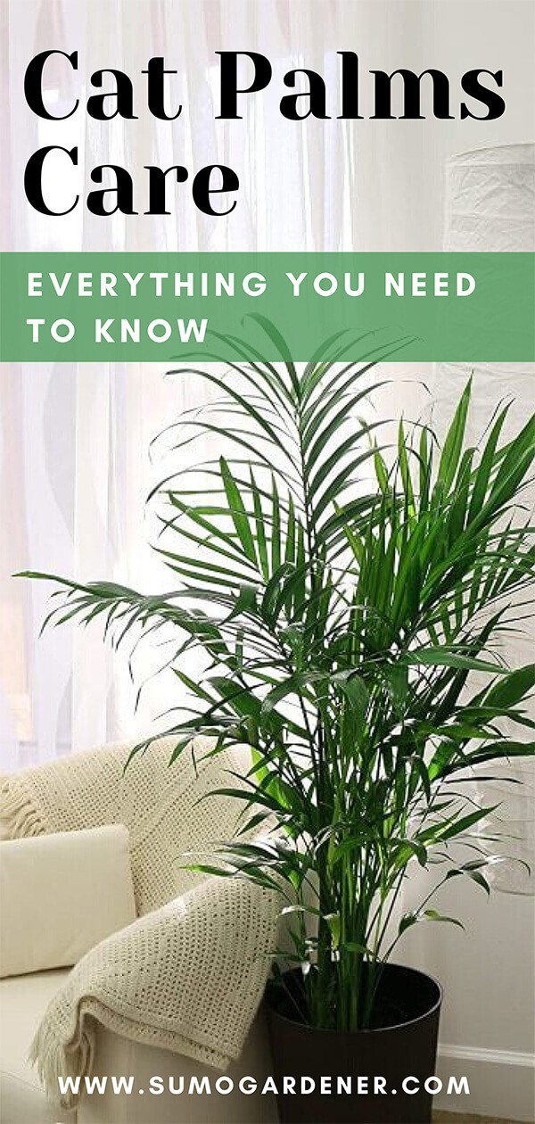 Cat Palms Care – Everything You Need to Know
