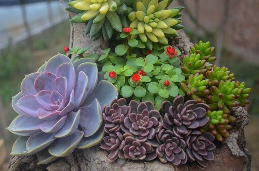 Different Types Of Succulent Flowers To Grow This Summer