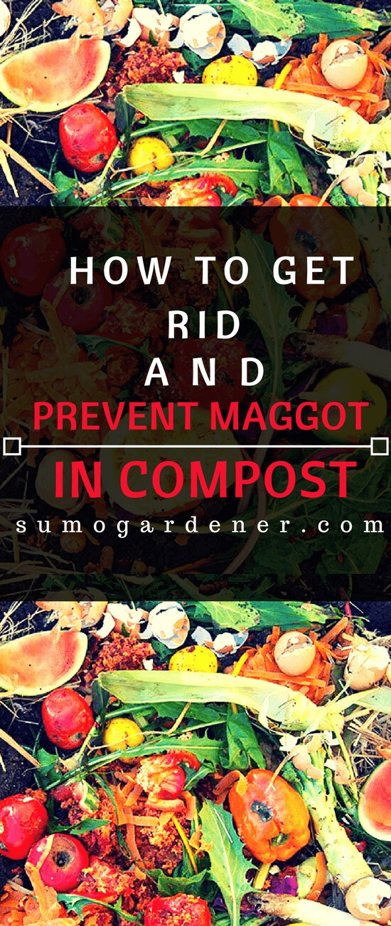 How to Get Rid and Prevent Maggot in Compost