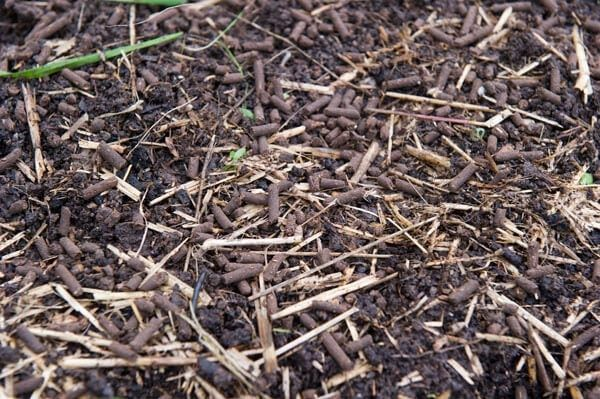 Mulching the bed of your garden will help the moisture to be conserved and will also contribute to lessening the growth of weed