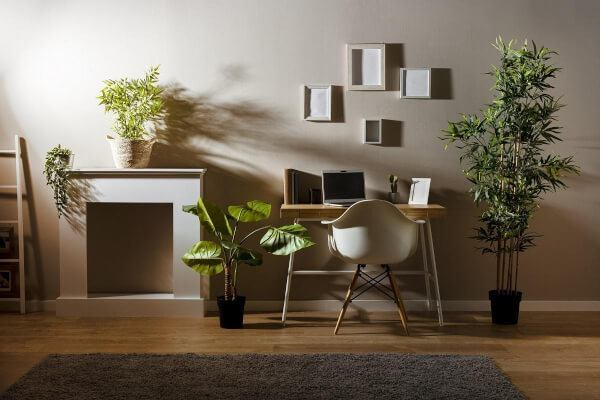 Top 5 Best Small Indoor Plants For Students