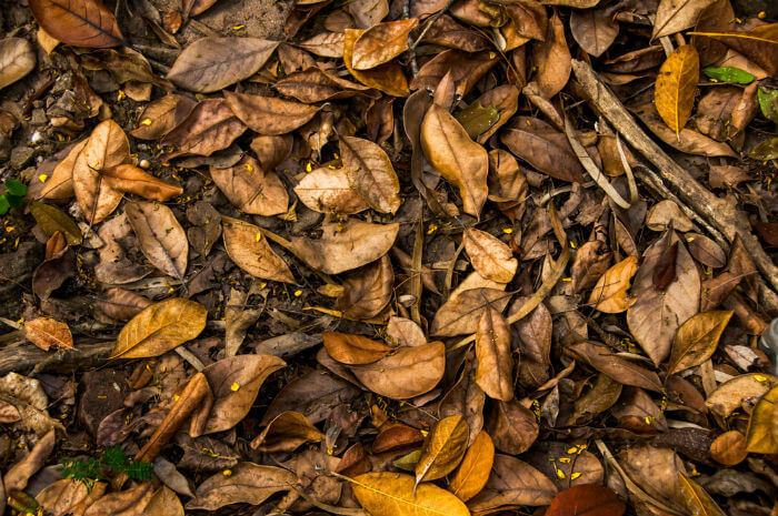 add a lot of browns into your compost bin