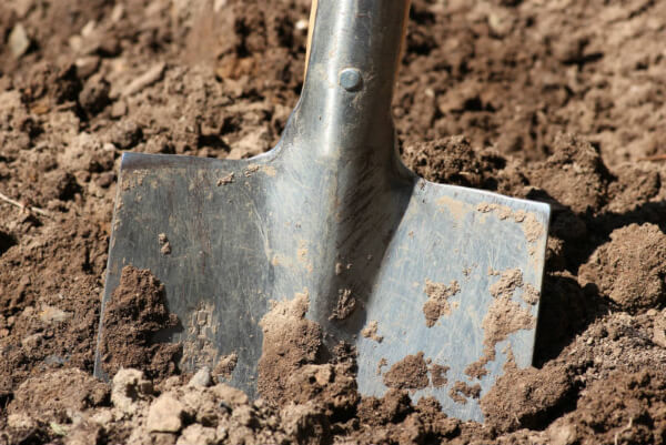 A spade is being used by gardeners to help them with their digging jobs