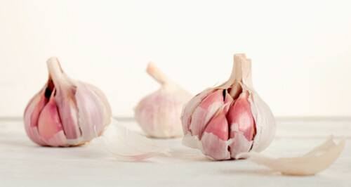 Garlic has various uses both in culinary and medicine