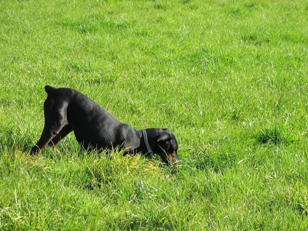 How to Stop Dogs from Digging Up Your Garden