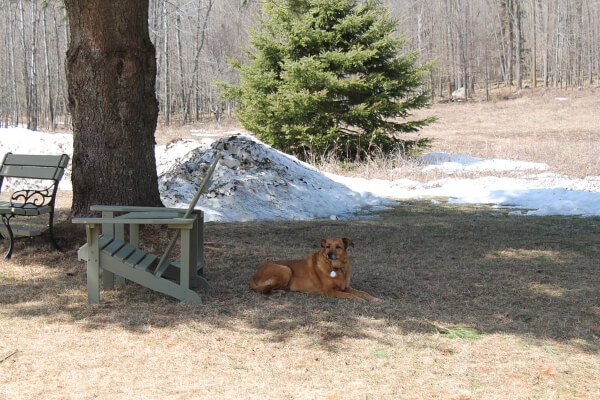 Make sure your dog has a cool, shady shelter