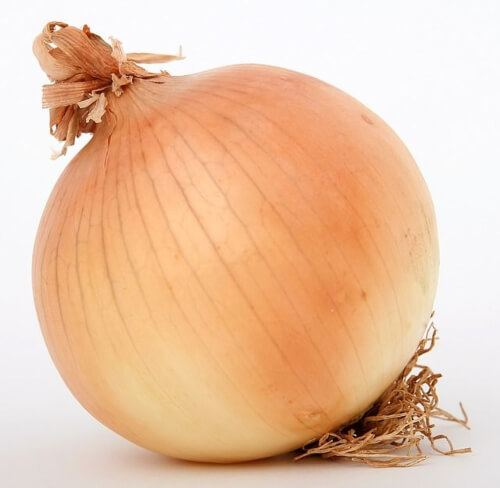 Onions that are shaped like a bulb are known as annual plants