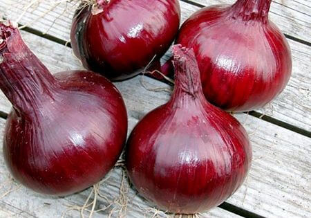 Red burgundy is a mild and sweet tasting onion that can be harvested in ninety-five days