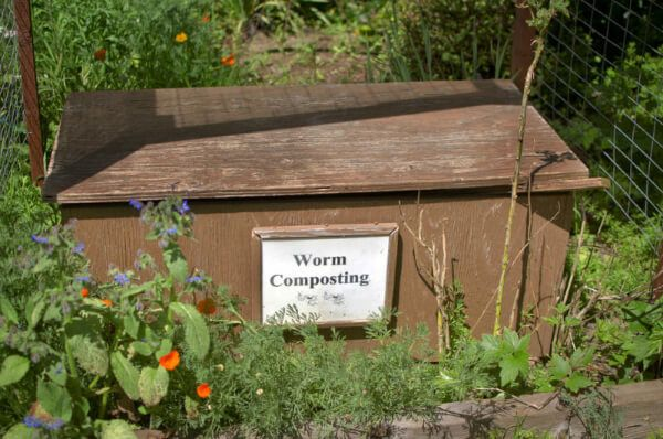 Worm composts are a hundred percent organic